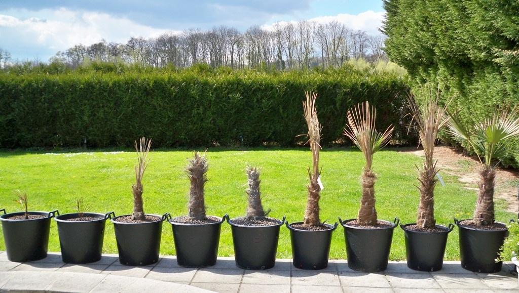 Quelques liens utiles - Engrais pour palmier ...